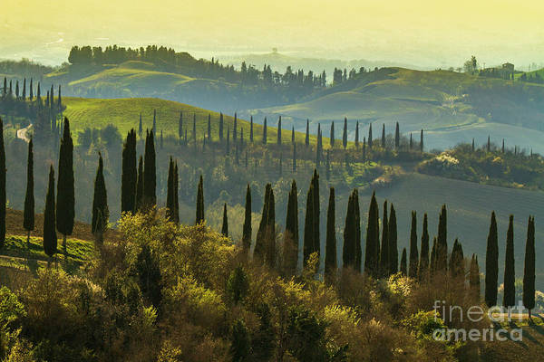 Wall Art - Photograph - Cypress Trees In Tuscany-1 by Heiko Koehrer-Wagner
