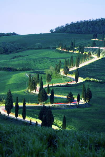 Photograph - Cypresses Along Windy Road by Franz Marc Frei