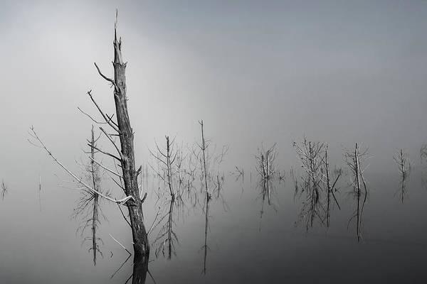 D1087 - Theewaterskloof Trees Art Print