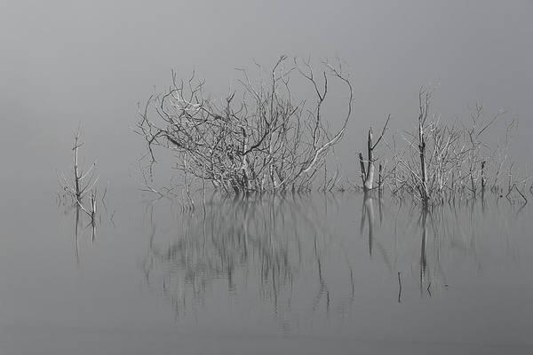 D1093 - Theewaterskloof Trees Art Print