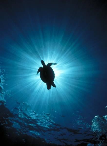 Underwater Scene Photograph - D974 Silhouette Of A Sea Turtle by Stein,erik