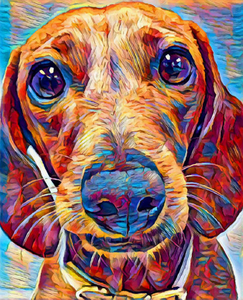 Wall Art - Painting - Dachshund 6 by Chris Butler