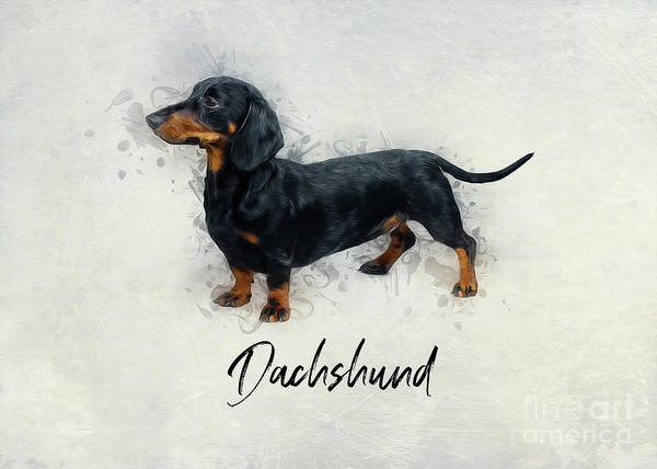 Digital Art - Dachshund  by Ian Mitchell