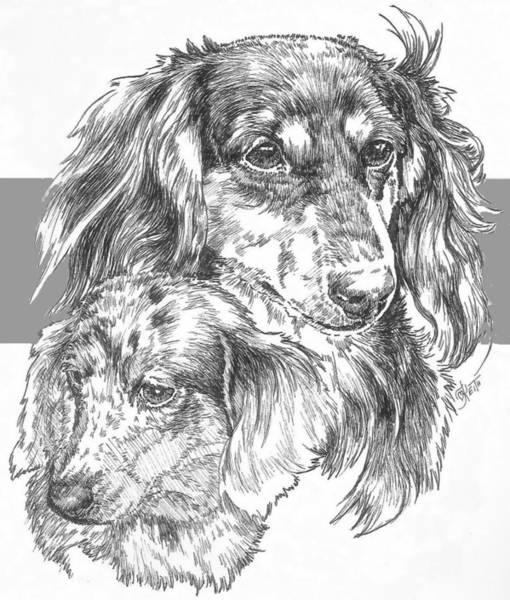Drawing - Dachshund - Long-hair And Pup by Barbara Keith