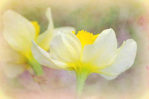 Essence Digital Art - Daffodil In A Dream by Gaby Ethington