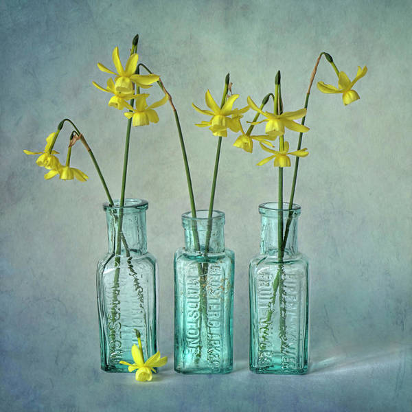 Photograph - Daffodils In Three Glass Bottles by Jacky Parker Photography
