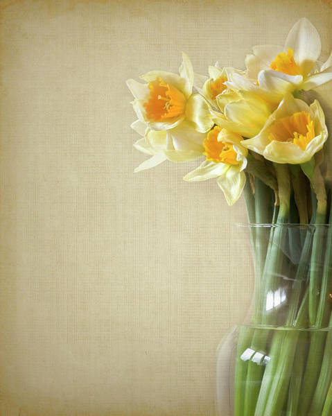 Vase Of Flowers Photograph - Daffodils In Vase by Jody Trappe Photography