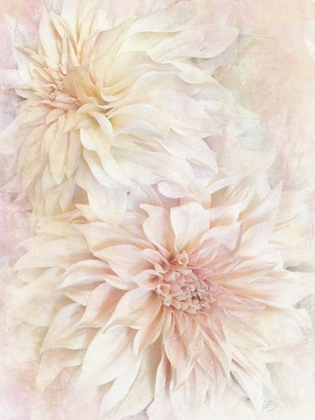 Photograph - Dahlia Beauties 2 by Jill Love
