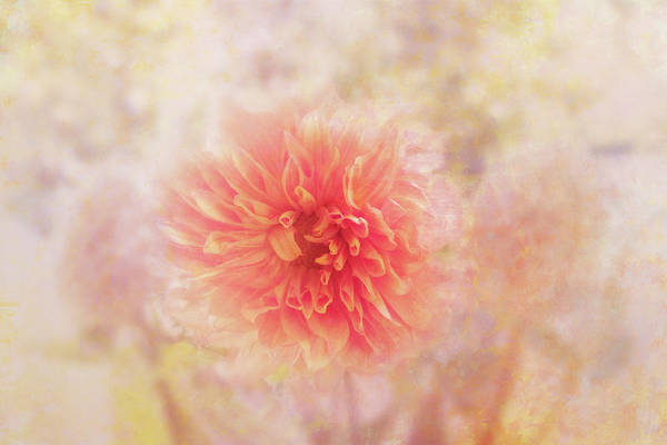 Wall Art - Digital Art - Dahlia Light by Terry Davis