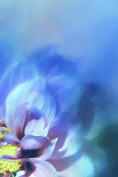 Wall Art - Digital Art - Dahlia On Blue by Terry Davis