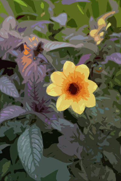 Digital Art - Dahlia Power by Garden Gate magazine
