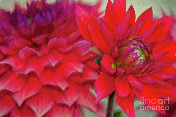 Photograph - Dahlia Red by Deborah Benoit