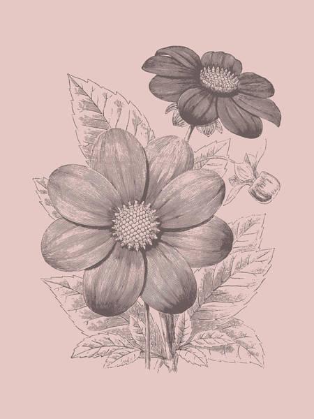 Wall Art - Mixed Media - Dahlias Blush Pink Flower by Naxart Studio