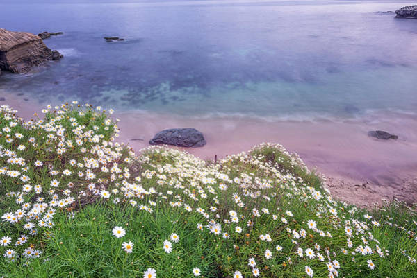 Wall Art - Photograph - Dainty Daisies At The Cove by Joseph S Giacalone