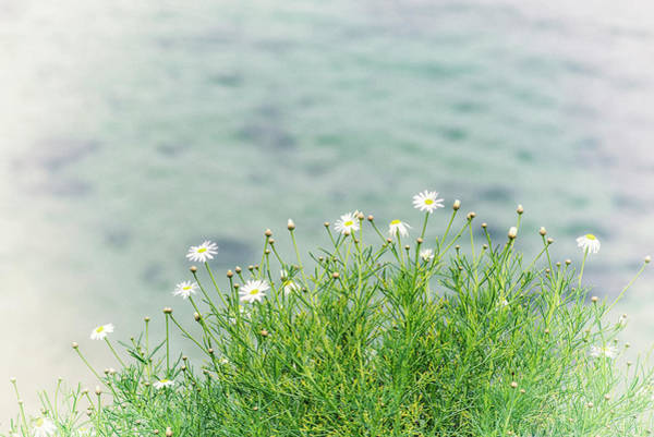 Wall Art - Photograph - Dainty Daisies Vintage by Joseph S Giacalone