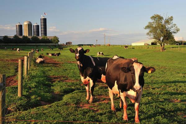 Milk Farm Photograph - Dairy Farm by Aimintang