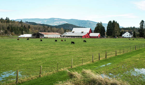 Photograph - Dairy Farm On Old 99 by Tom Cochran