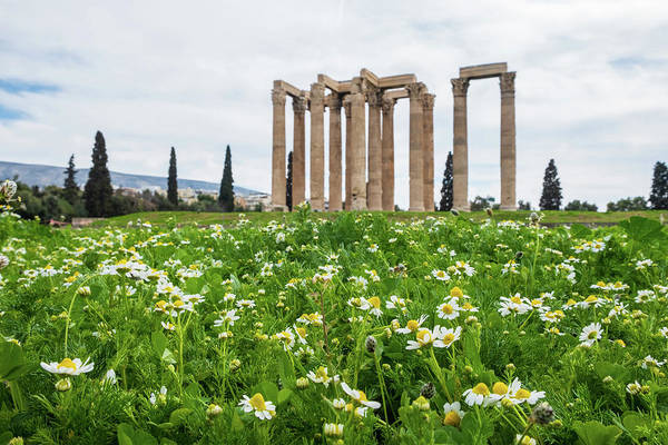 Photograph - Daisies And The Ancient Temple Of Olympian Zeus In Athens by Iordanis Pallikaras
