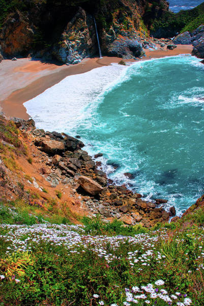 Monterey Bay Photograph - Daisies Bloom In Profusion In Big Sur by Elfi Kluck
