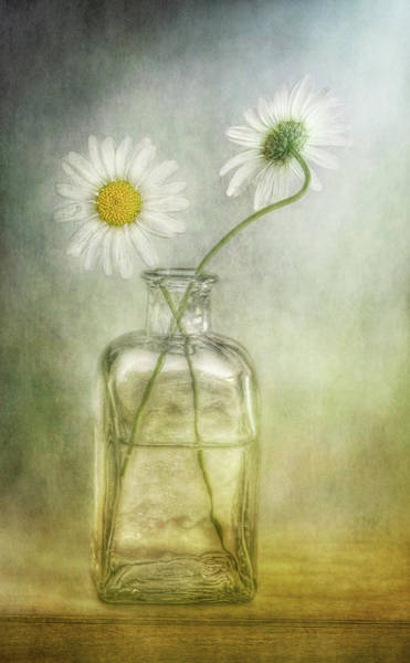 Bottle Photograph - Daisies by Mandy Disher Photography