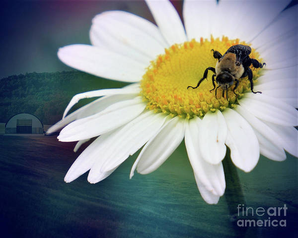 Wall Art - Photograph - Daisy Bea Bee by Karen Beasley