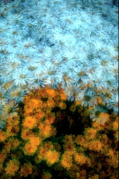 Wall Art - Photograph - Daisy Collage by David Smith