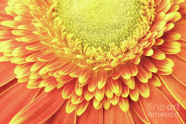 Photograph - Daisy Day by Marilyn Cornwell