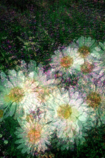 Flower Beds Photograph - Daisy Floral Pattern by David Smith