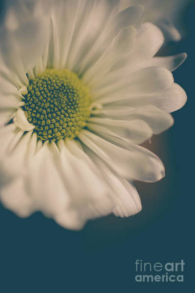 Wall Art - Photograph - Daisy Flower 0954 by Edward Fielding