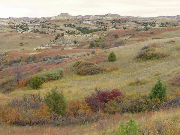 Photograph - Dakota West Prairie Treasure by Cris Fulton