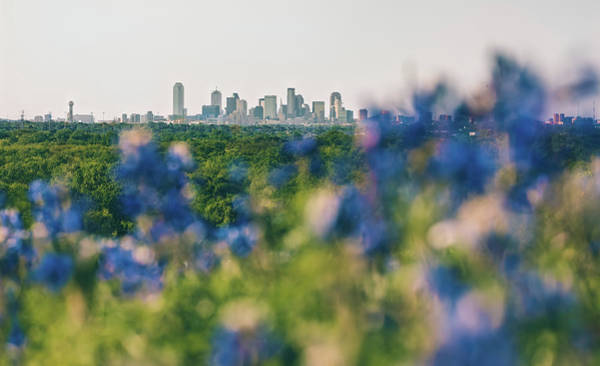 Photograph - Dallas County Bluebonnets by Peter Hull