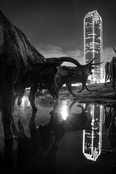 Photograph - Dallas Texas Longhorn Cattle Drive Sculptures And Skyline Reflections - Monochrome by Gregory Ballos