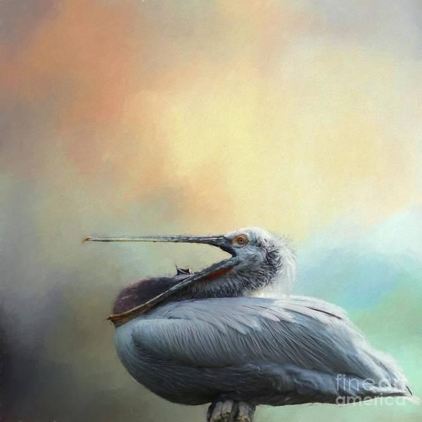 Pelican Mixed Media - Dalmatian Pelican by Eva Lechner