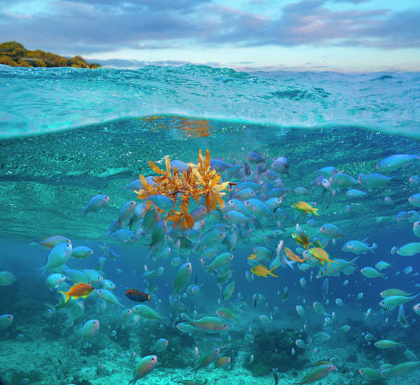Wall Art - Photograph - Damselfish And Basslet School by