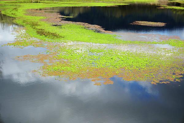 Photograph - Damselfly Pond - 19 4503 by Tari Kerss