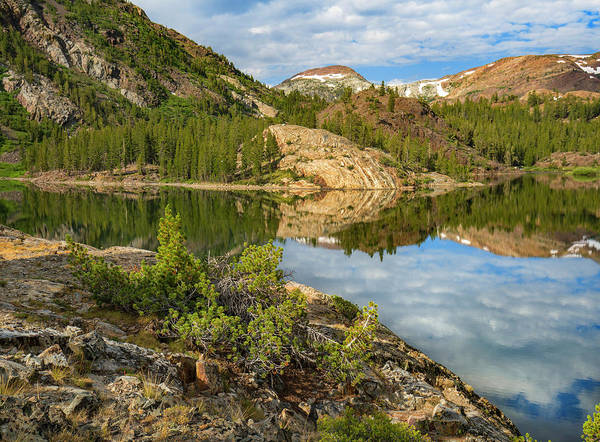 Photograph - Dana Plateau From Ellery Lake, Sierra by Tim Fitzharris