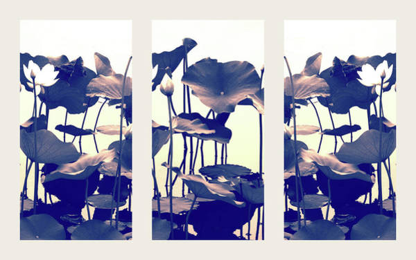 Lotus Pond Photograph - Dance Of The Lotus Triptych by Jessica Jenney