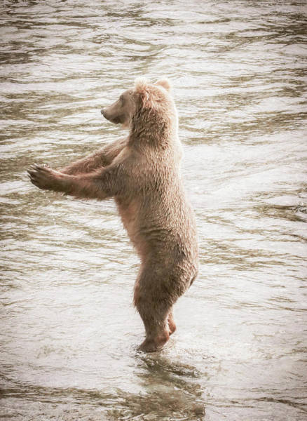 Dancing Bears Photograph - Dance With Me 2 by Lisa Bell