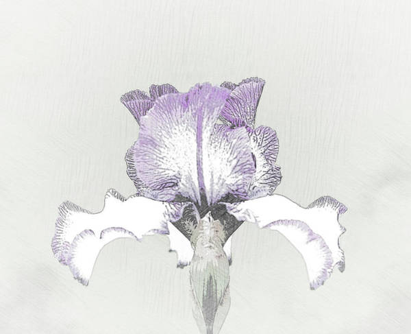 Purple Iris Mixed Media - Dancing By Myself by Sherry Hallemeier