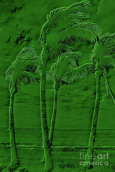 Wall Art - Photograph - Dancing Caribbean Palm Trees Embossed Green by John Stephens