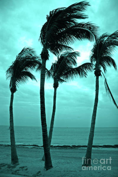 Wall Art - Photograph - Dancing Caribbean Palm Trees - Key West Casa Marina by John Stephens