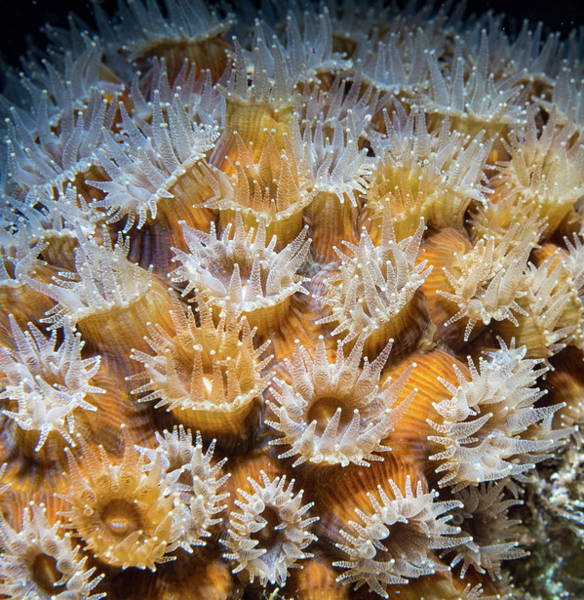 Photograph - Dancing Coral by Jean Noren