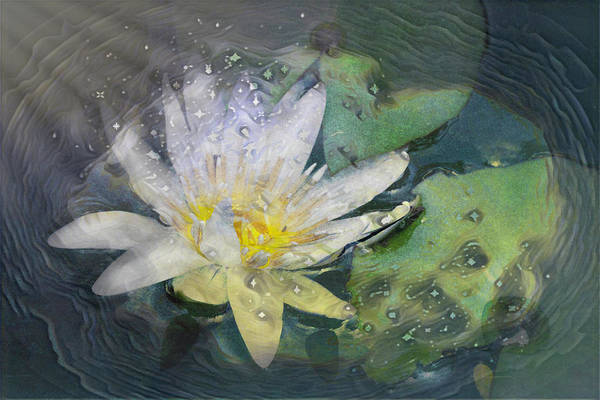 Photograph - Dancing Lily Of Love by Debra and Dave Vanderlaan