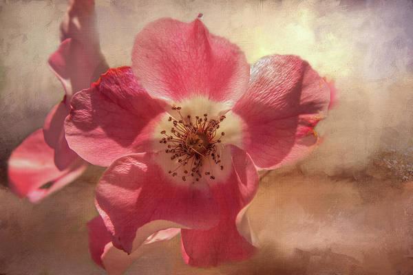 Wall Art - Digital Art - Dancing Rose Beauty by Terry Davis
