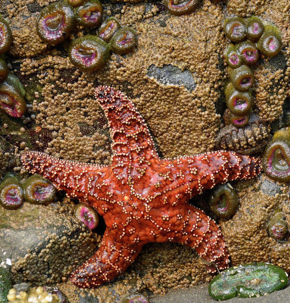 Photograph - Dancing With The Starfish by Bruce Gourley