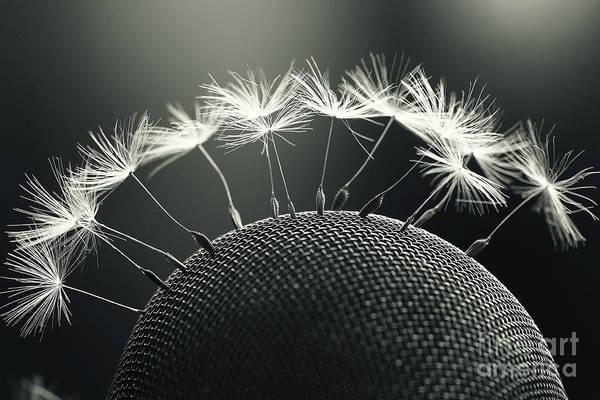 Fluffy Wall Art - Photograph - Dandelion Seeds Macro by Kichigin