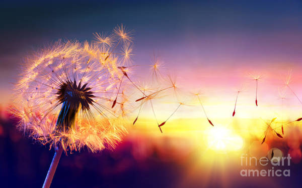 Wall Art - Photograph - Dandelion To Sunset - Freedom To Wish by Romolo Tavani