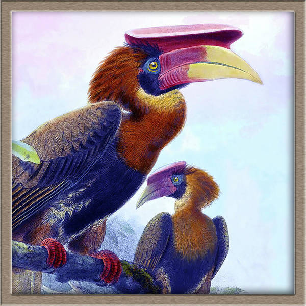 Hornbill Drawing - Daniel Giraud Elliot Gallery Icon by Daniel Giraud Elliot