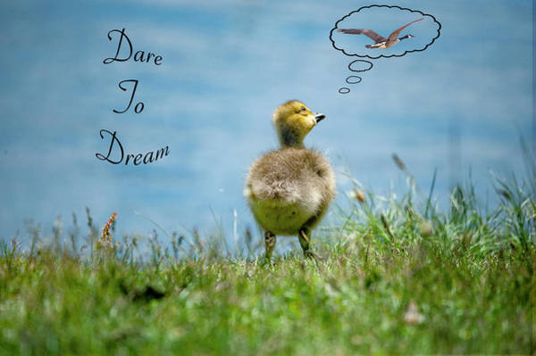 Photograph - Dare To Dream by Cathy Kovarik