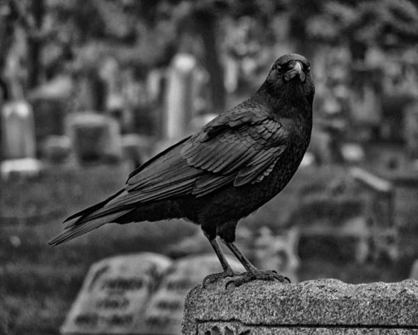 Wall Art - Photograph - Dark Crow by Gothicrow Images